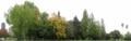 [東千田公園]北側の林