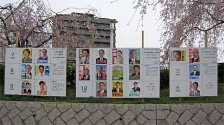 猿猴川の堤防「桜」とポスター掲示場