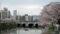 手前「猿猴橋」奥「駅前大橋」猿猴川東岸より