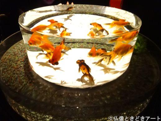 丸い水槽を泳ぐ金魚の画像