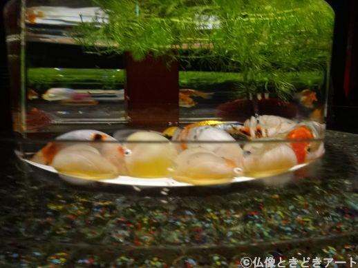 円形の水槽に佇む丸っこい金魚を寄って撮影した画像