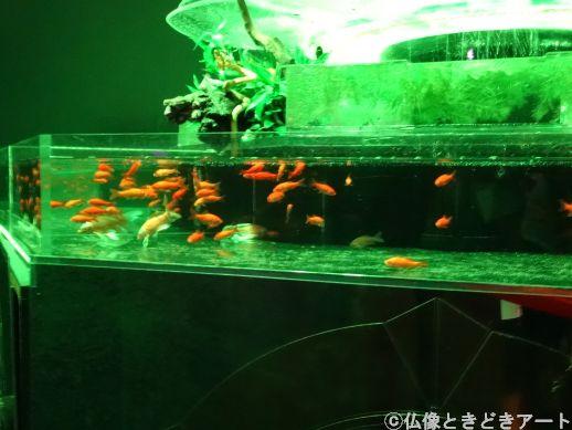 緑色にライトアップされた水槽を泳ぐ金魚の画像