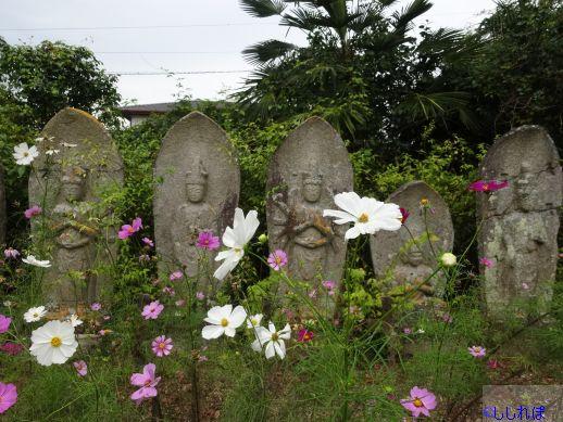 石仏の前にコスモスが咲いている画像