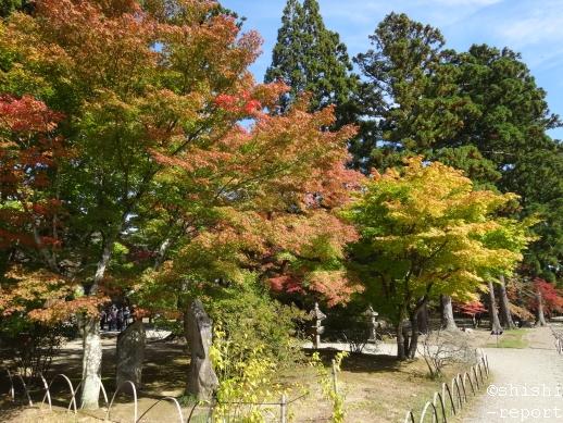 紅葉が始まった木々の画像