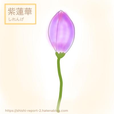 紫色のつぼみの状態の蓮華のイラスト
