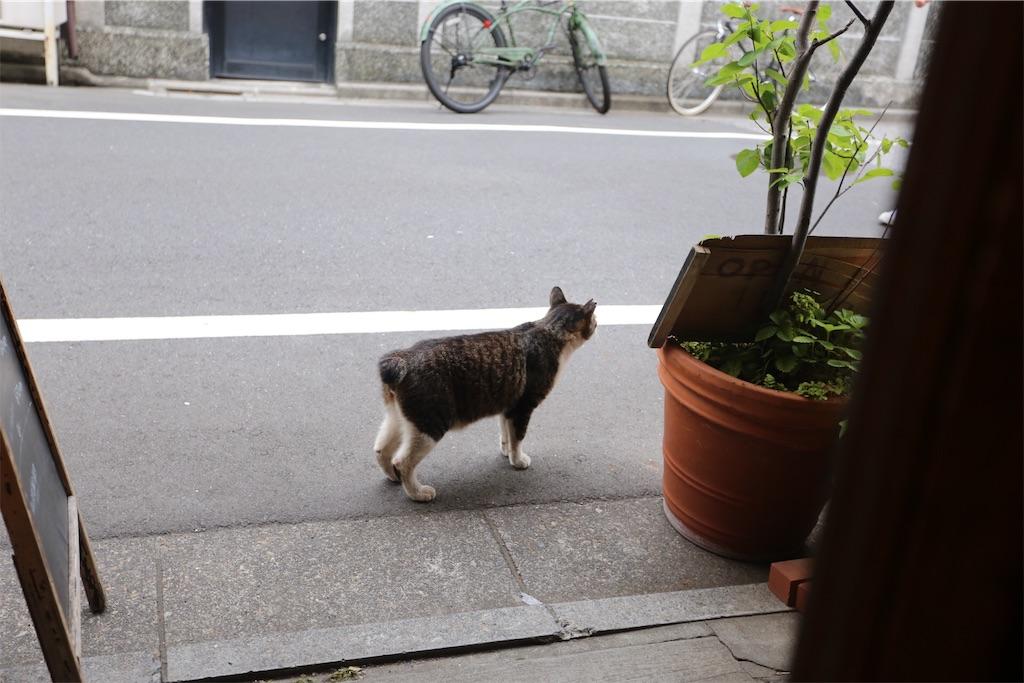 f:id:shitamachi-dog:20170716221454j:image