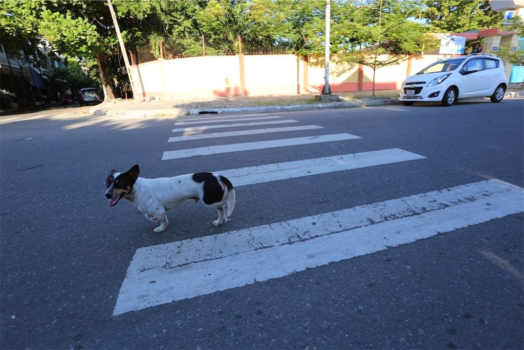 f:id:shitamachi-dog:20170912150154j:image