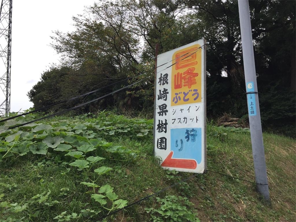 f:id:shitamachi-dog:20170921004630j:image