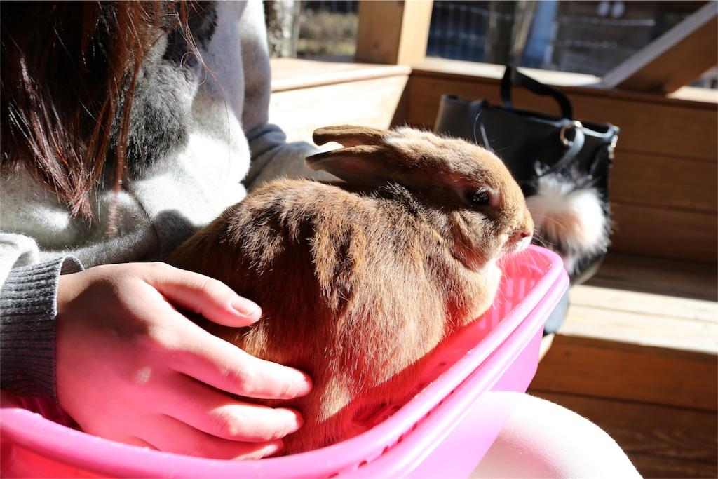 f:id:shitamachi-dog:20171231011738j:image