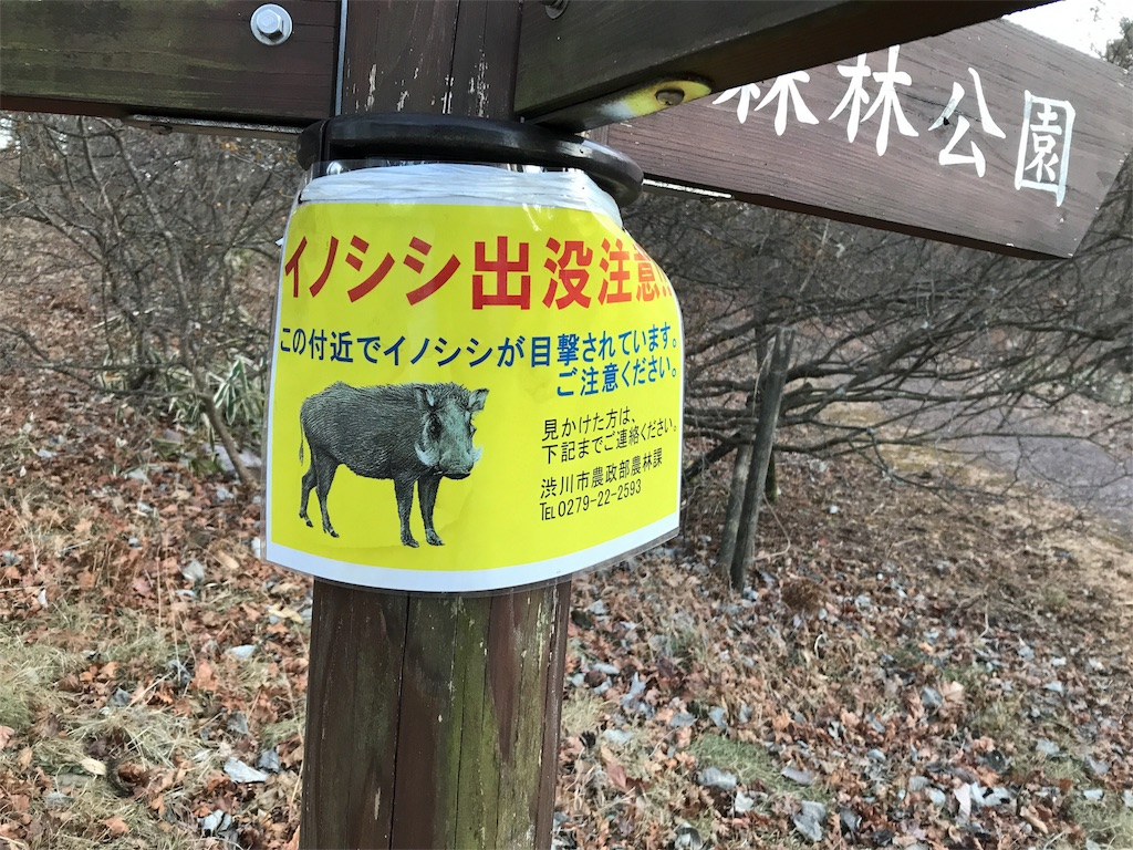 f:id:shitamachi-dog:20180102134757j:image