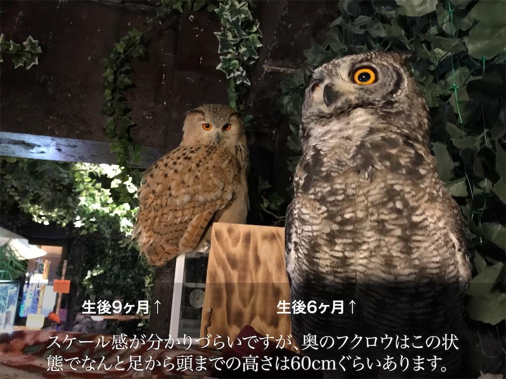 f:id:shitamachi-dog:20180104231552j:image