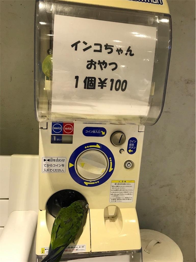 f:id:shitamachi-dog:20180322201506j:image