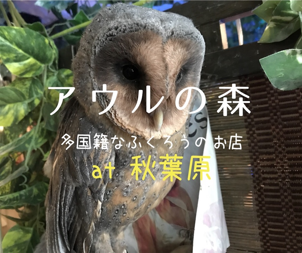 f:id:shitamachi-dog:20180324203826j:image