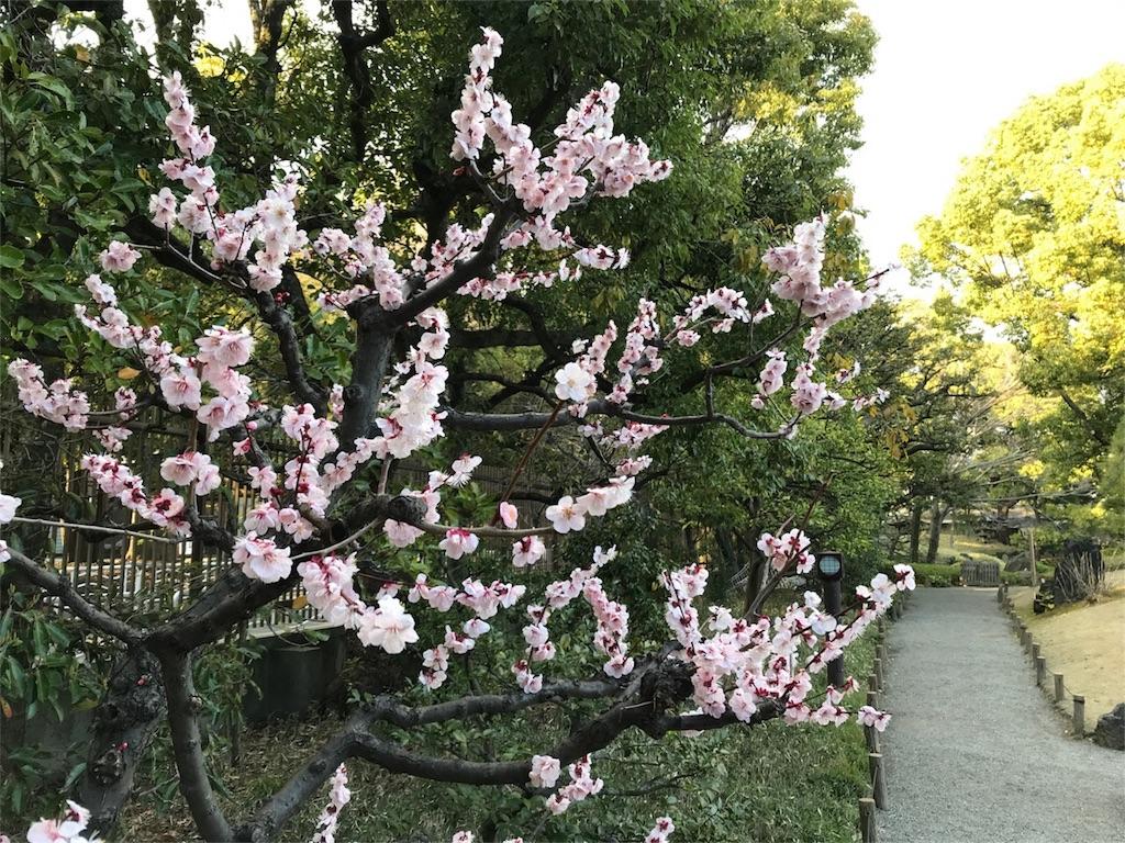 f:id:shitamachi-dog:20180408155650j:image