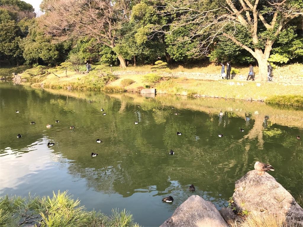 f:id:shitamachi-dog:20180408155707j:image