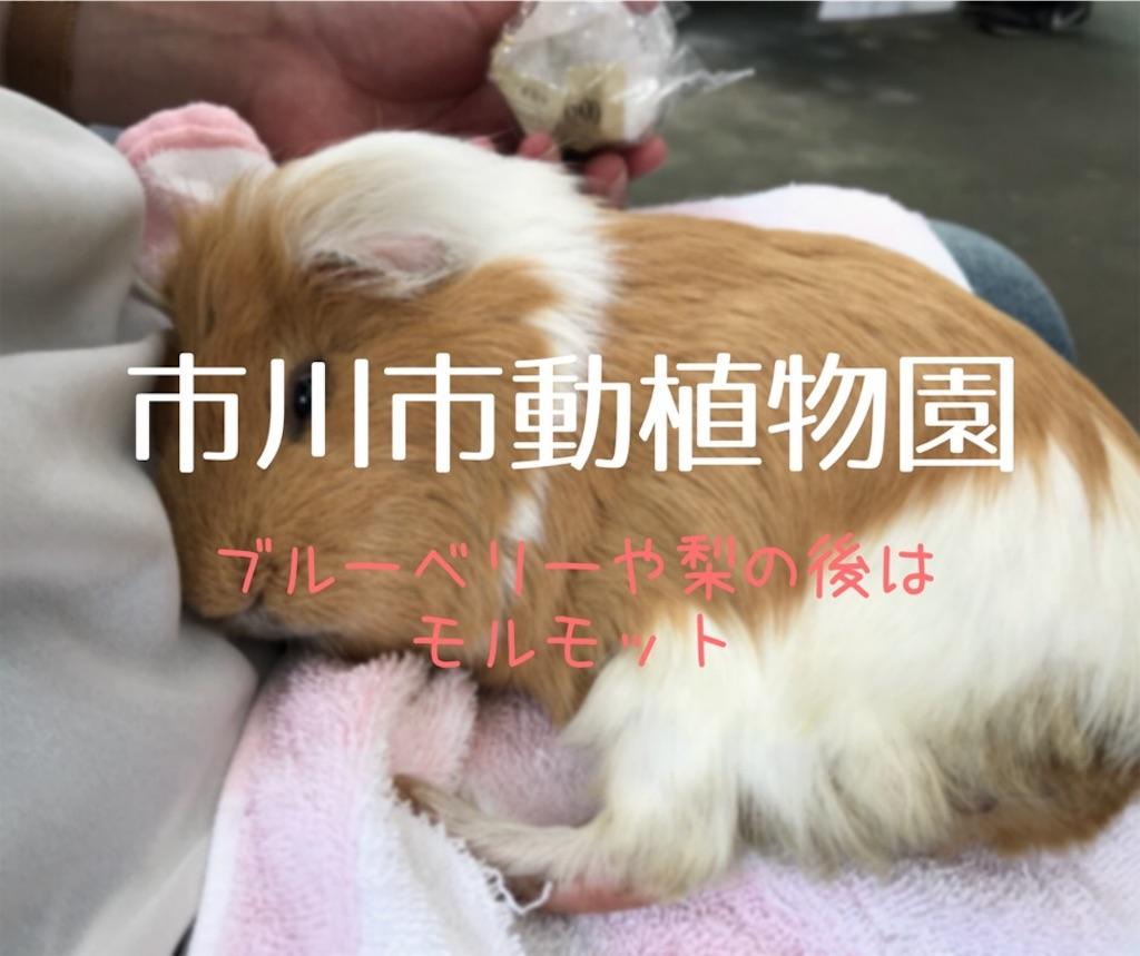 f:id:shitamachi-dog:20180723000254j:image