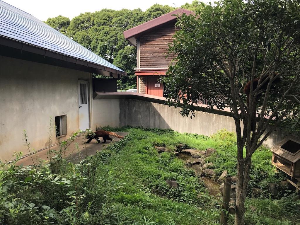 f:id:shitamachi-dog:20180724013546j:image