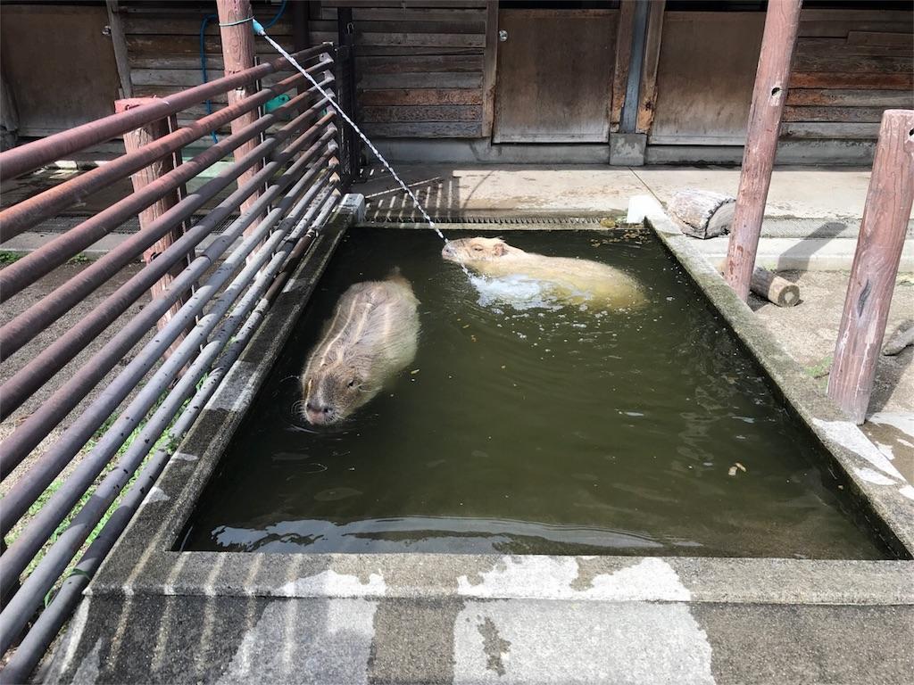 f:id:shitamachi-dog:20180724013551j:image