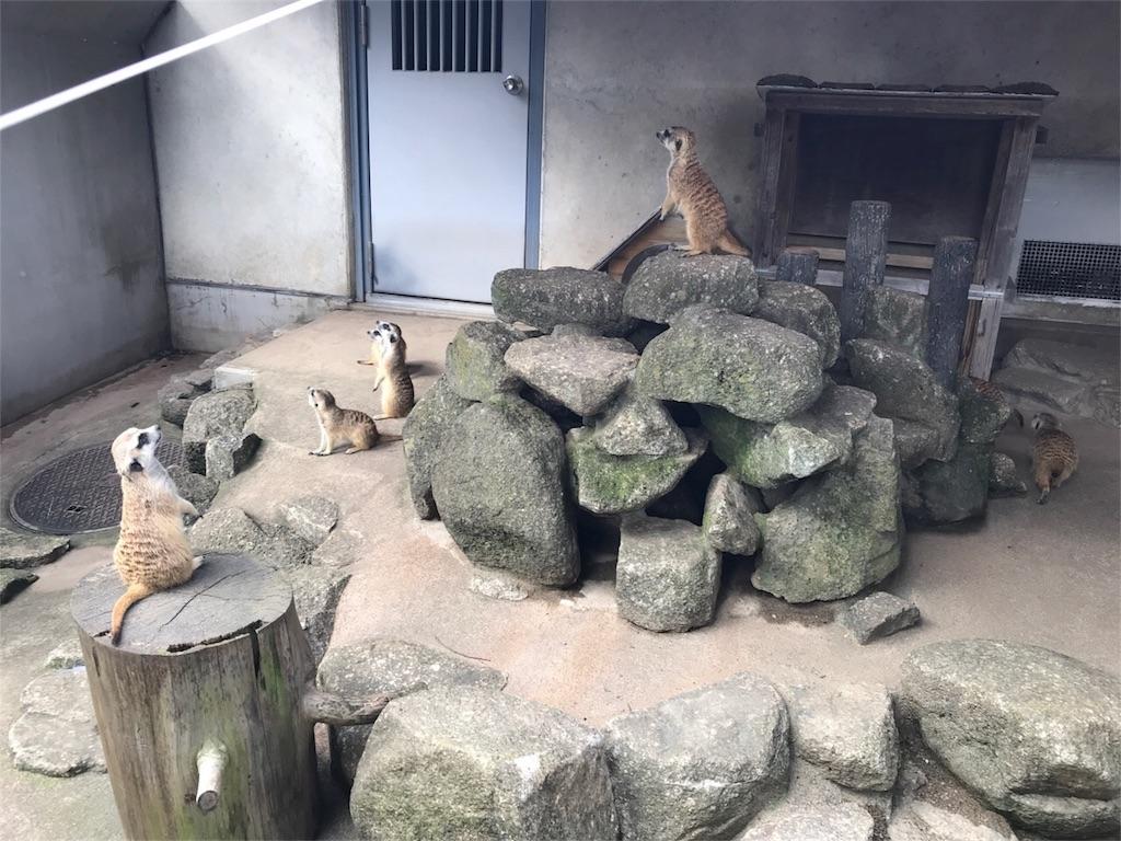f:id:shitamachi-dog:20180724013554j:image