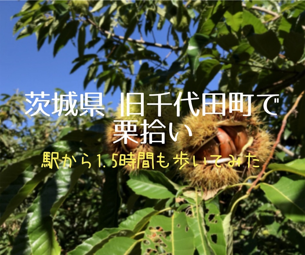 f:id:shitamachi-dog:20180910213248j:image