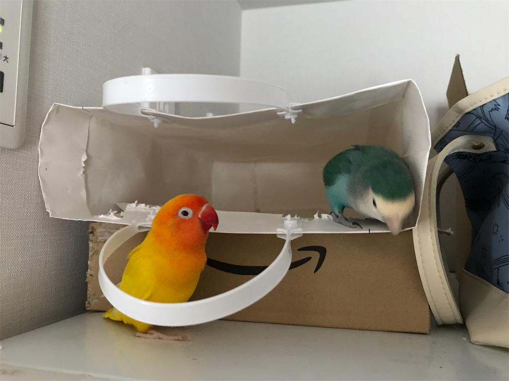 遊ぶ二羽のインコ