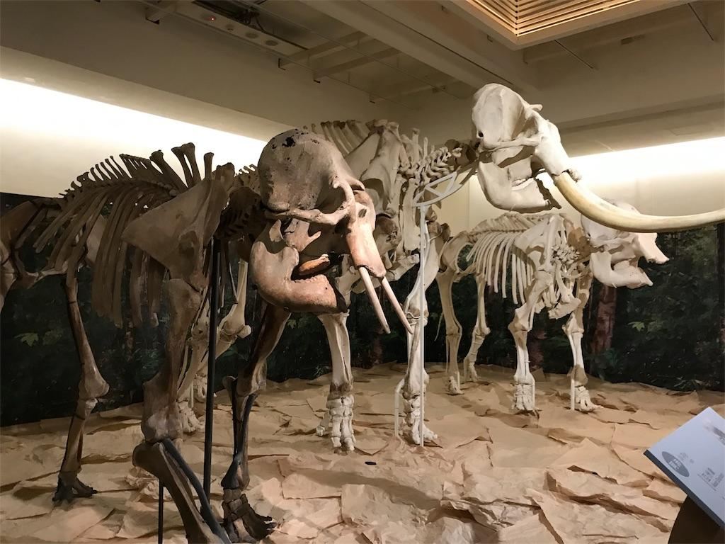 台湾国立博物館の象とマンモス