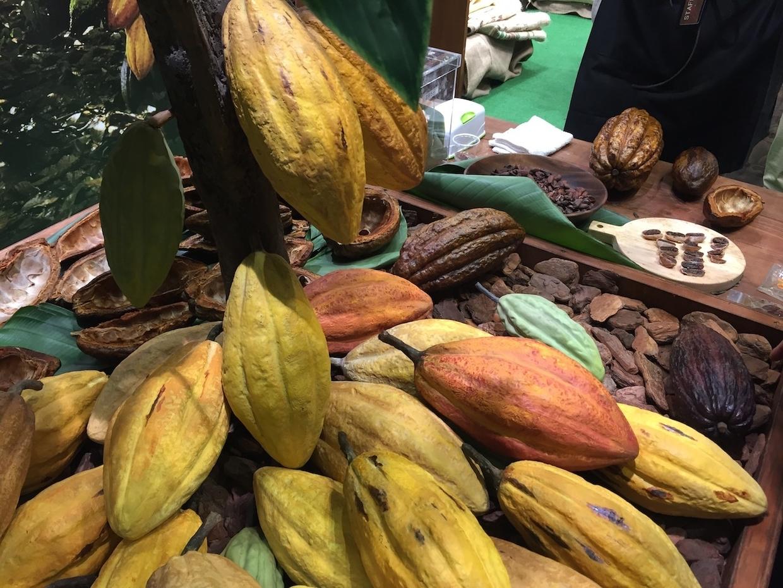 チョコレートの原料カカオ豆