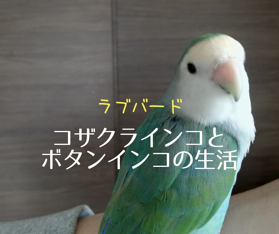 f:id:shitamachi-dog:20190702125300j:image
