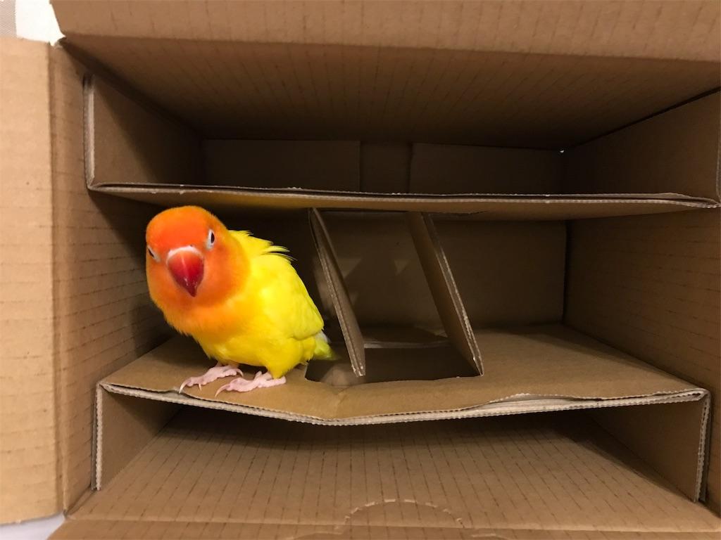 箱の中のインコ