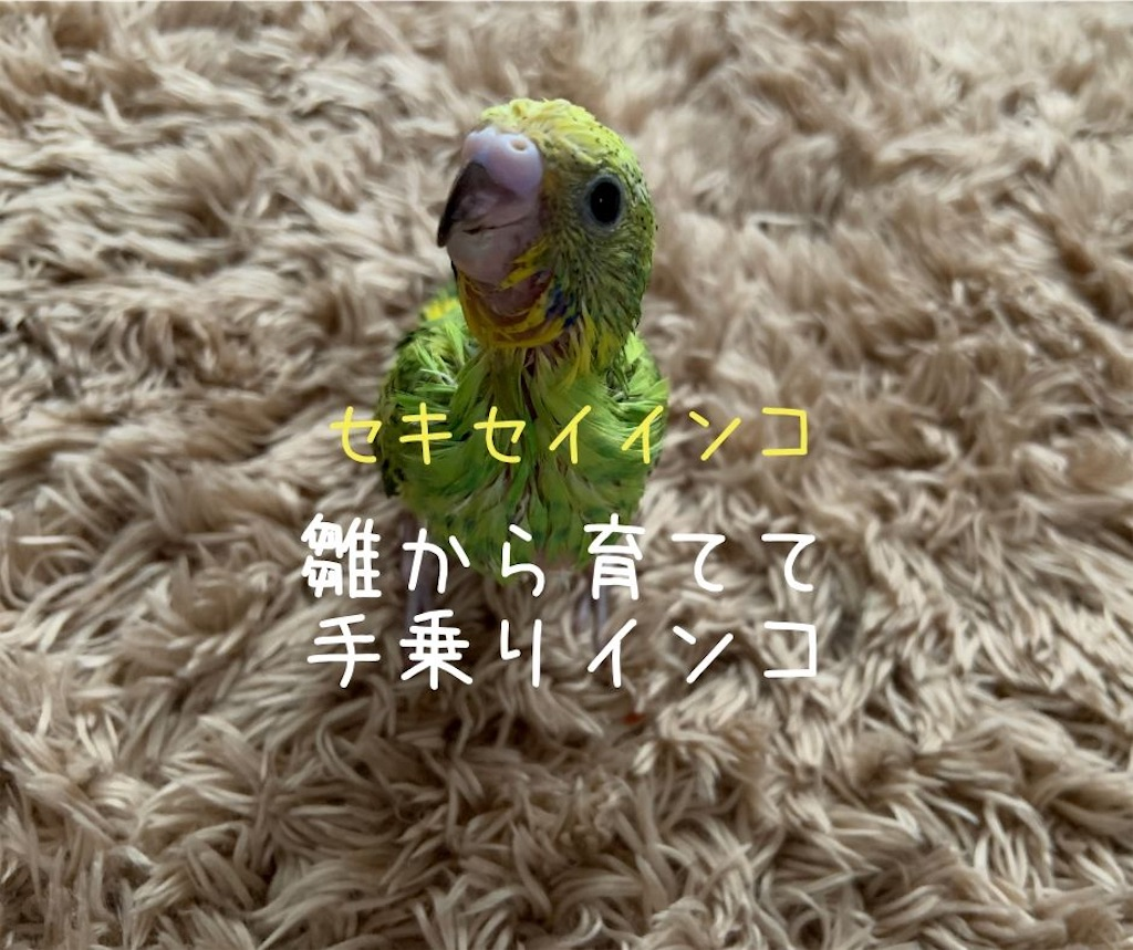 f:id:shitamachi-dog:20200628224324j:image