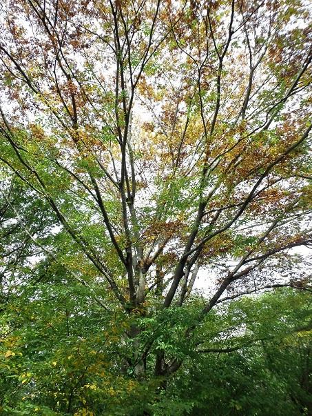 f:id:shizengaku:20111023111831j:image:w240