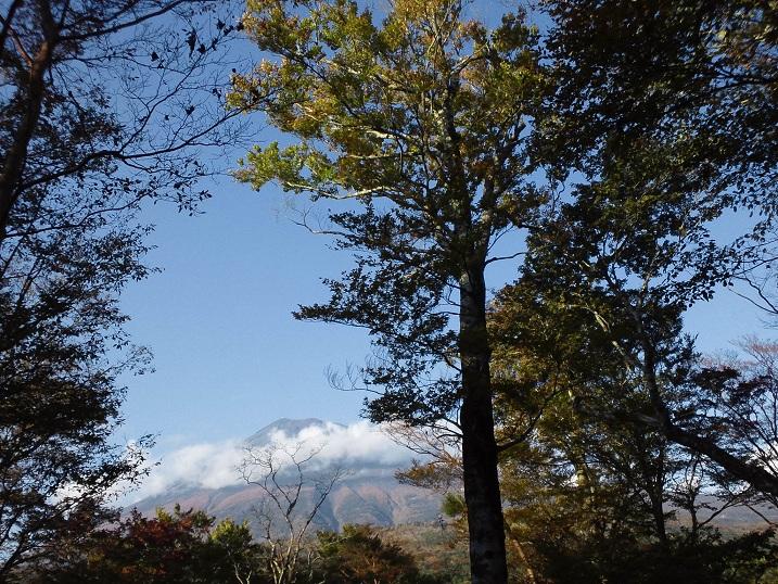 f:id:shizengaku:20111023155430j:image:w360