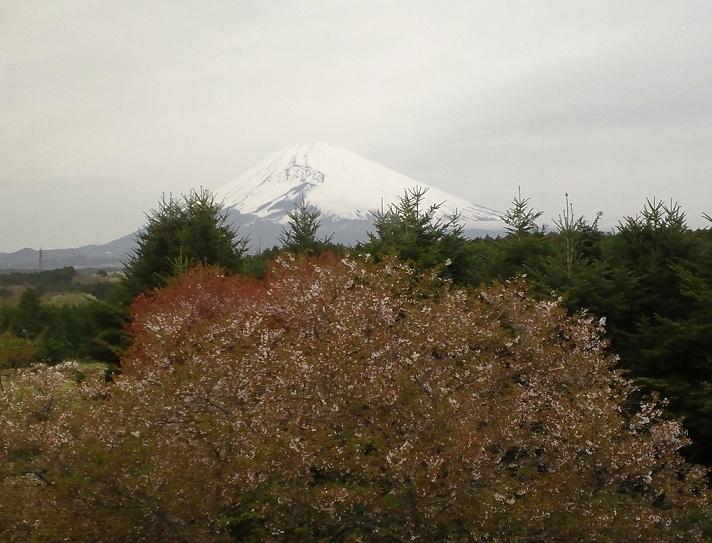 f:id:shizengaku:20120422082853j:image:w360