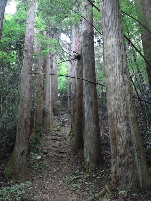 f:id:shizengaku:20120603075146j:image:w200