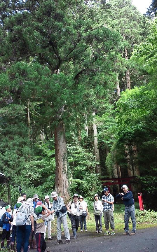 f:id:shizengaku:20160904184938j:image:w200