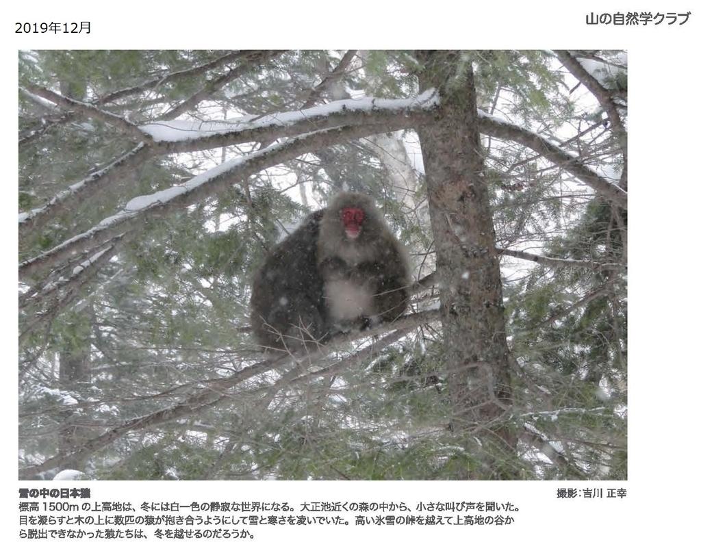 f:id:shizengaku:20190227172127j:plain