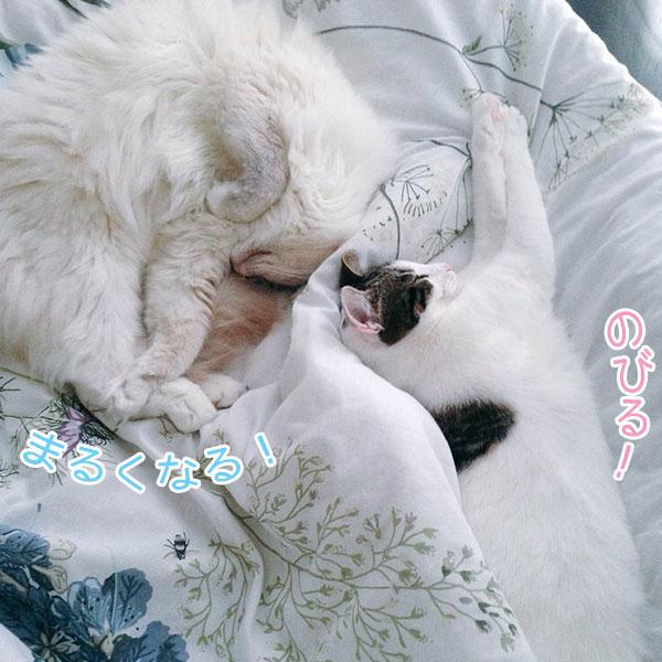 f:id:shizukabryce:20170211021241j:plain