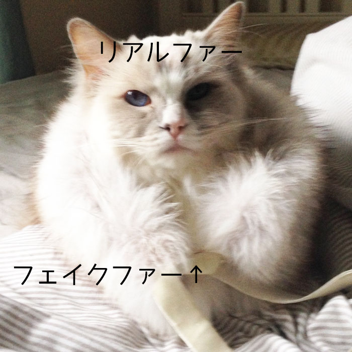 f:id:shizukabryce:20170223041357j:plain