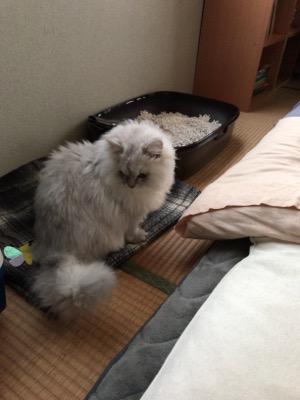 f:id:shizuku-ru:20170225150423j:plain