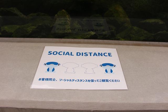 f:id:shizuku9:20200608144340j:plain