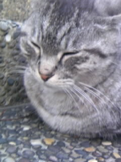 f:id:shizuoka_ccc:20090406175214j:image