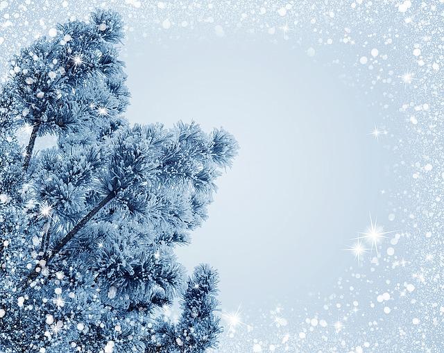 さむい冬が到来
