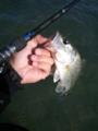 [琵琶湖] 20121008 琵琶湖湖西