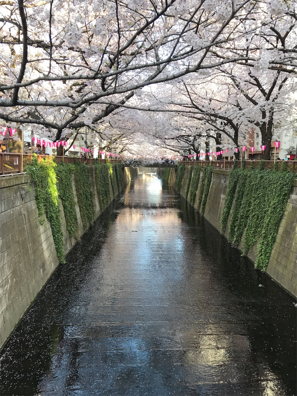 f:id:sho_ishi:20170407233026j:image