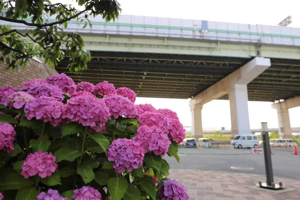 f:id:sho_ishi:20170610164320j:plain