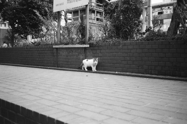 f:id:shoheikannauchi:20170903220333j:plain