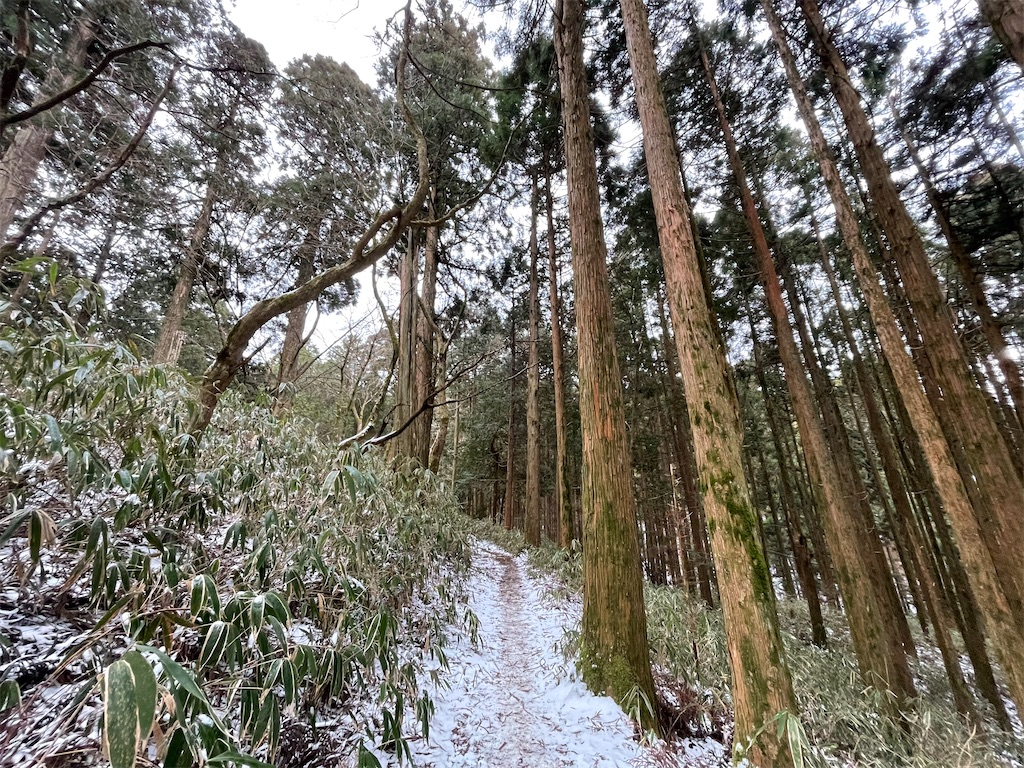 f:id:shokichi48:20210301224920j:image