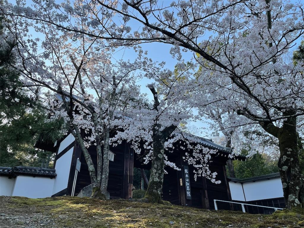 f:id:shokichi48:20210327095208j:image