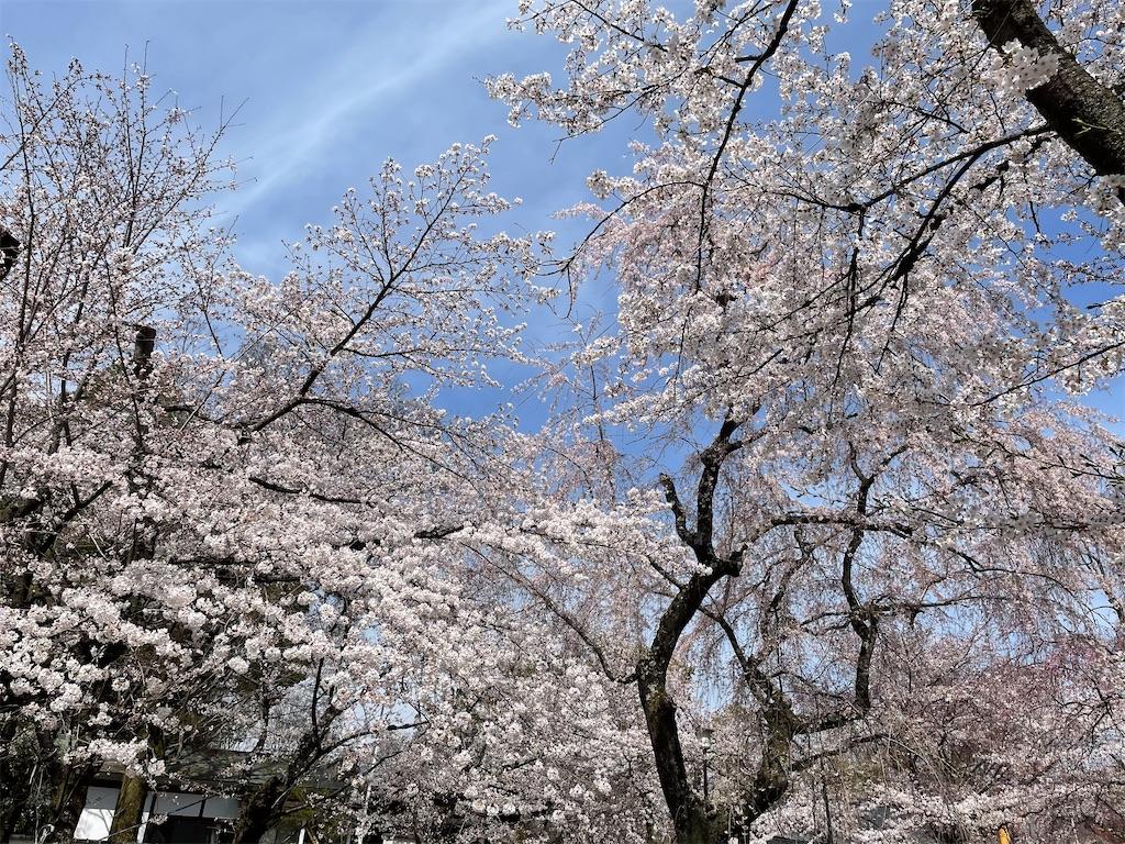 f:id:shokichi48:20210327174213j:image