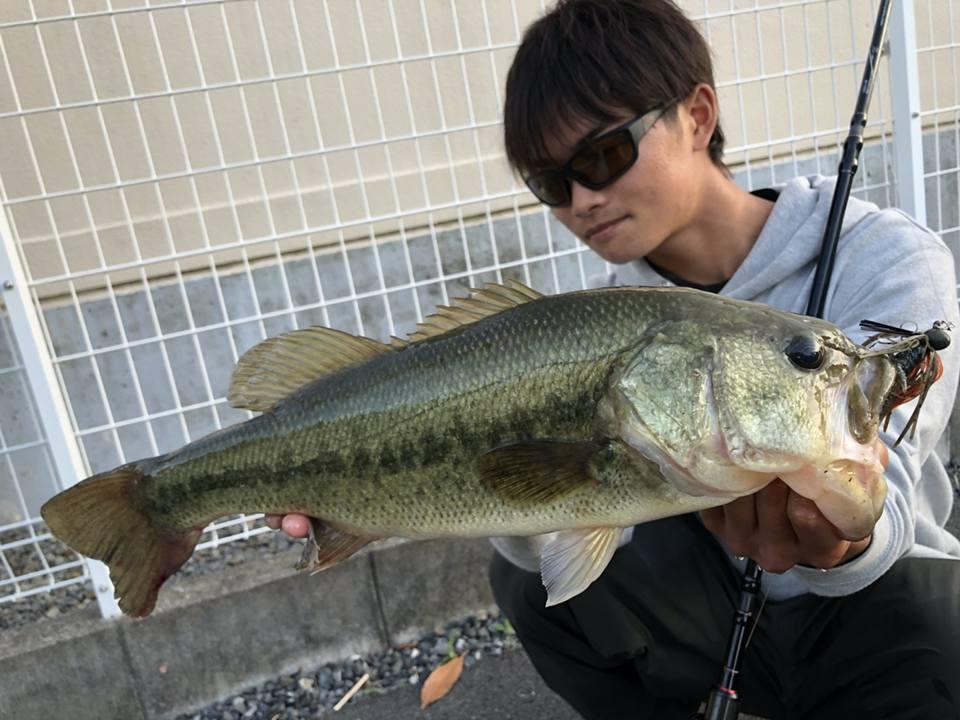 f:id:shokicimorikawa:20180607202707j:plain
